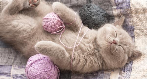 La petite laine de christine for L univers de la laine
